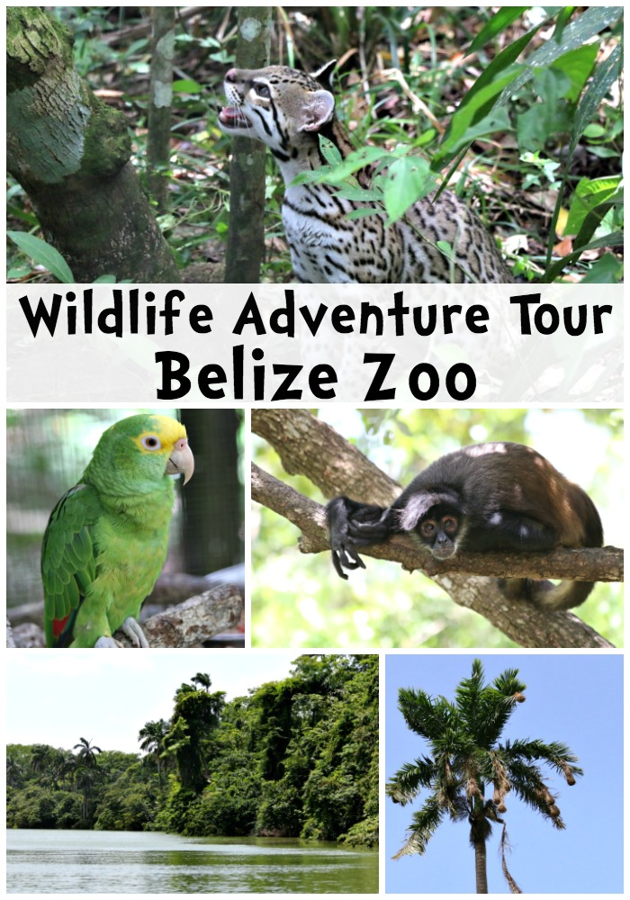 Wildlife Adventure Tour Belize Zoo