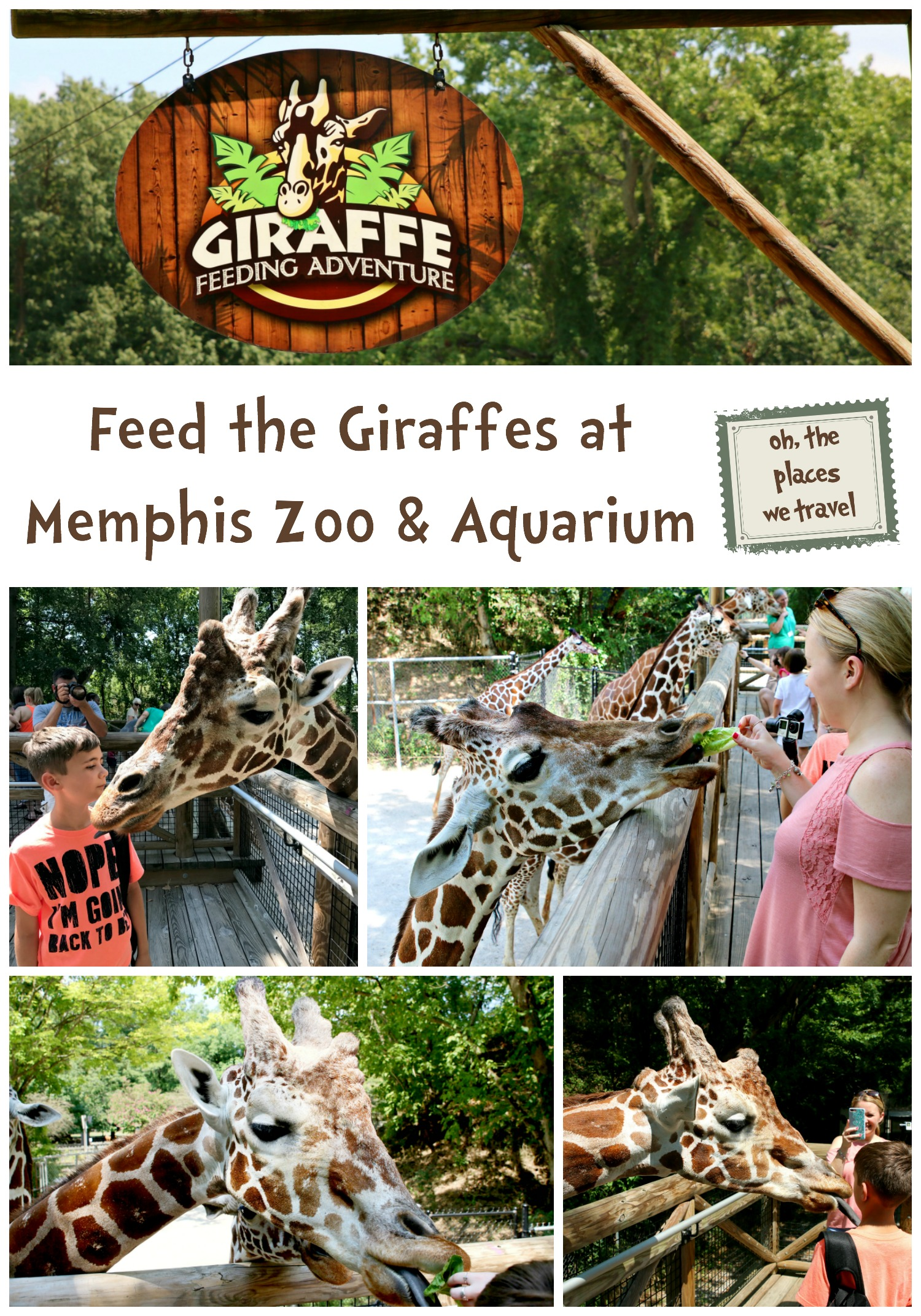 Feed the Giraffes at Memphis Zoo